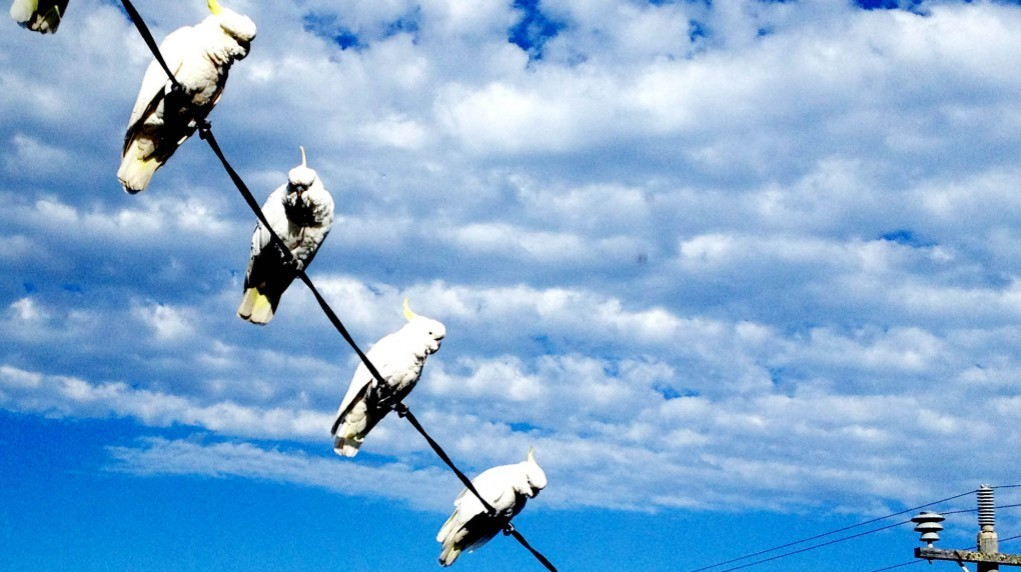 cropped-birds-on-wire2.jpg